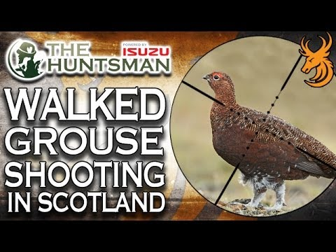 Walked Up Grouse Shooting in Scotland