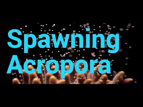 Project Coral, Inducing Broadcast Spawning in Acropora, a paper