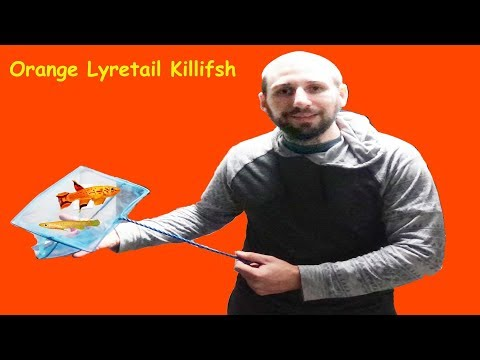 KILLIFISH BREEDING: All You Need To Know!