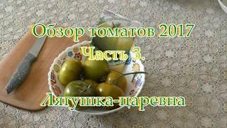 Обзор томатов 2017г. Часть 5. Лягушка-царевна
