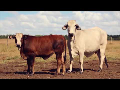 Herefords Australia Northern Promotional Video 2018
