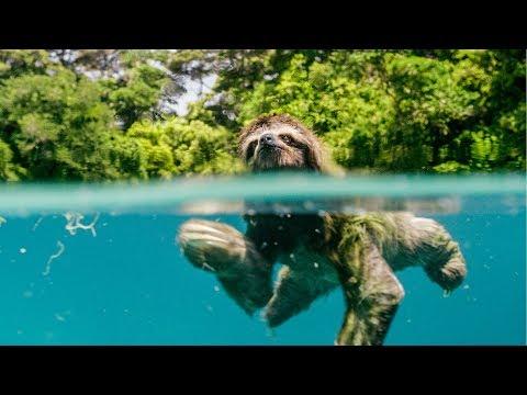 Earth: Den na zázračné planetě – Trailer CZ 4K dabing Ivan Trojan