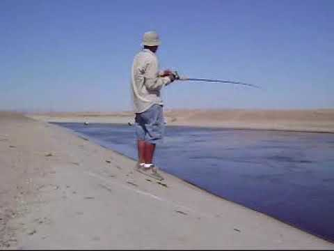 california aqueduct striped bass fishing