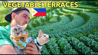 Mind Blowing VEGETABLE TERRACES of the PH