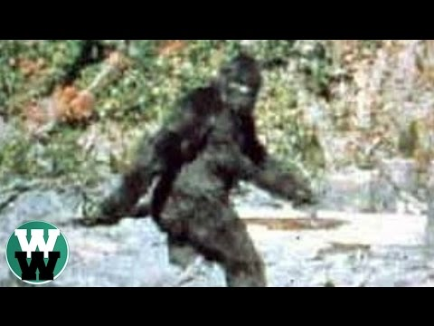 20 Most Convincing Bigfoot Sightings of All Time