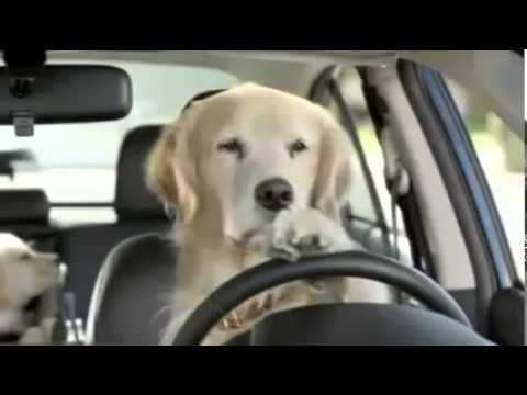 dogs drive crazy
