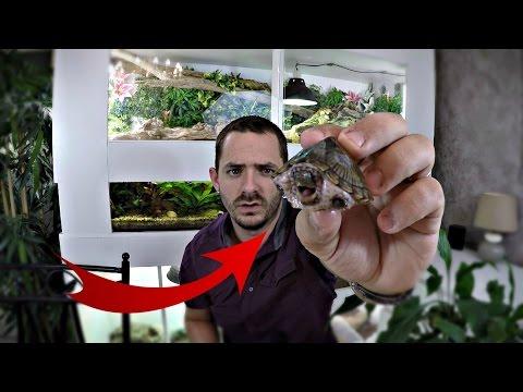 Aménagement d'un aquarium pour tortue d'eau