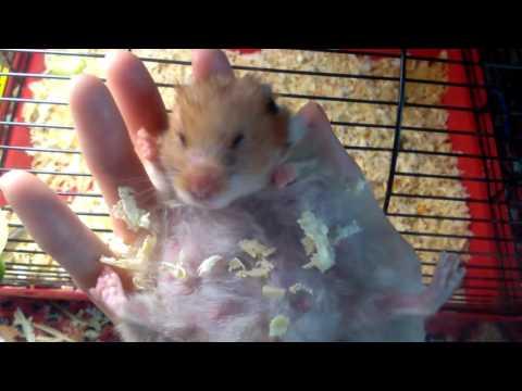 видео: Няшка собирается рожать
