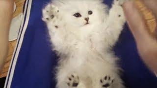 Surprised Kitty thumbnail
