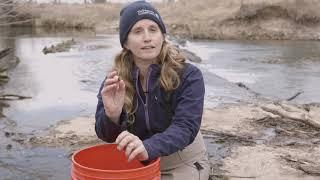 Macro invertebrates with Kim Elkin