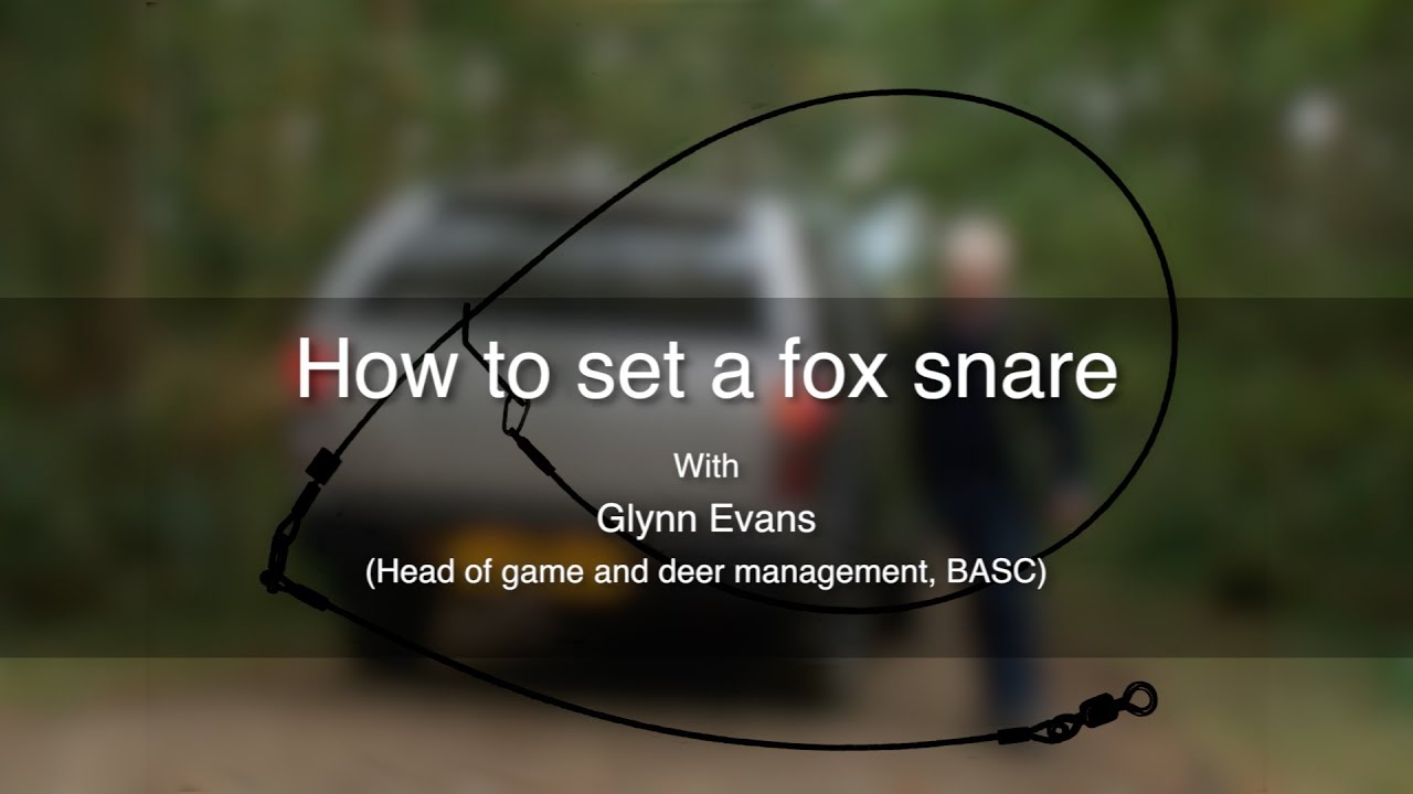 How to set a fox snare  YouTube