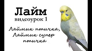 "Учим разговаривать попугая по имени Лайм. Видеоурок 1: ""Лаймик птичка, Лаймик супер птичка!"""