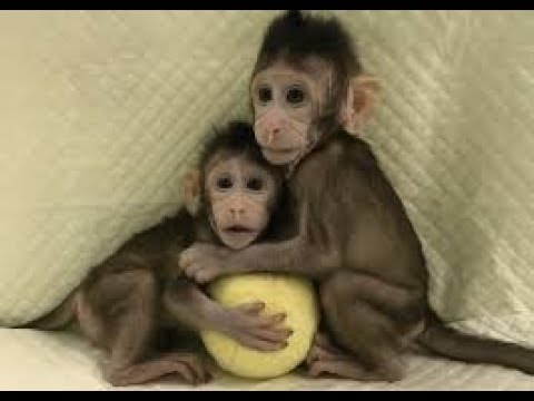 Cute Monkeys Part #50 – Baby Monkey Really Happy or Suffering, Free or Detention?