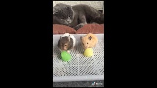 Funny Adorable & Cute Animal-Compilation 2018 (5)