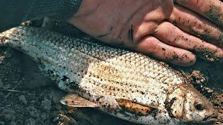 ПЕРВАЯ АСТРАХАНСКАЯ ВОБЛА Вот это рыбалка просто сказка Еле ноги унес