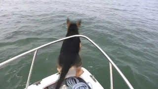 Странная собака. Собака прыгает в воду с обрыва - NAT GEO WILD