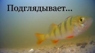 Движение рыб. Съемка под водой