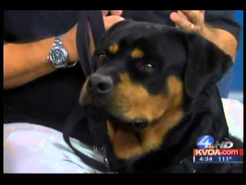 The Rottweiler Breed - Gerard Raneri Dog Training In Tucson  on KVOA