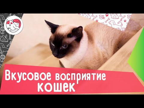 9 интересных фактов о вкусовом восприятии кошек