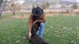 How To Dog Train Chocolate Labrador Retriever