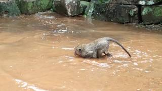 Sweet Pea swimming water very funny one, How funny baby SP swimming
