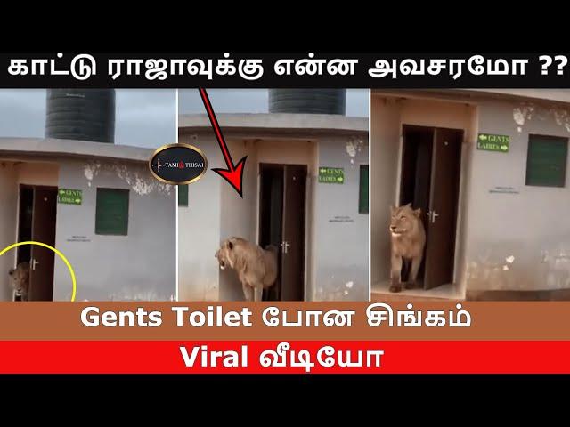காட்டு ராஜாவுக்கு என்ன அவசரமோ ?? Gents Toilet போன சிங்கம்   TamilThisai   TTNews    Lion   Safari  