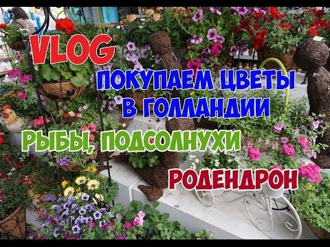 Орхидеи « Цветы