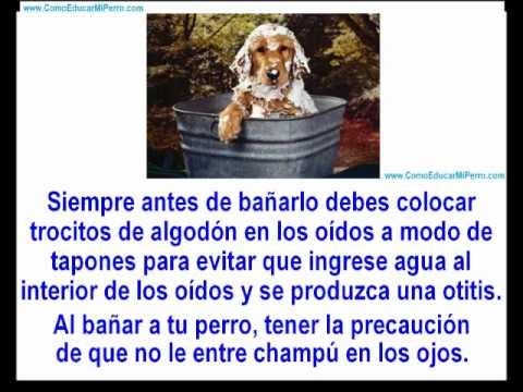 Como ba ar a un perro cachorro como ba ar a un cachorro videos de perros en youtube youtube - Como banar a un perro ...