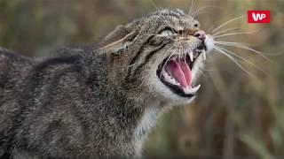 Koty zjadły człowieka. Zaskakujące wyniki eksperymentu