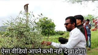 पेड पर जा बैठा कोबरा सांप, ऐसा वीडियो आपने कभी देखा नही होगा, Cobra snake rescue opration Ahmednagar