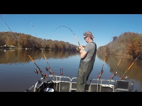 Video Pictures channel catfish