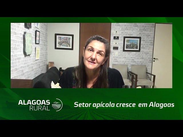 Campo Empreededor: Setor apícola cresce  em Alagoas