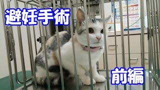 A documentary of neuter operation for my precious cat, Nekokichi, (first part)