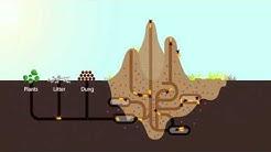 How Termites Enrich Ecosystems   HHMI BioInteractive Video