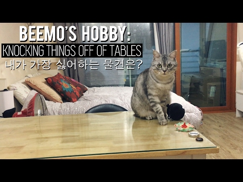 Cat Knocking Stuff off of a Table 고양이 비모가 가장 싫어하는 물건은?