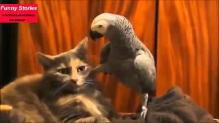 Приколы с животными, смешные животные, выпуск 4 самых новых видео с животными 2015