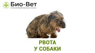 Рвота у собаки. Ветеринарная клиника БИО-ВЕТ.