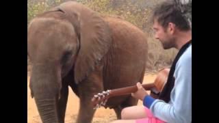 damon albarn canta para un elefante mr tembo