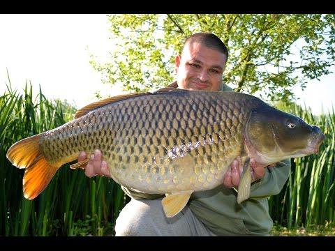 Carp Fishing Bury Hill Temple Lake