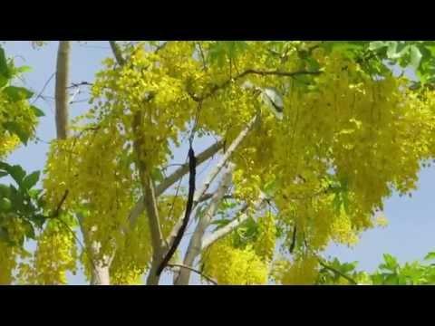 Писсинг и золотой дождь онлайн в порно HD Ero HD
