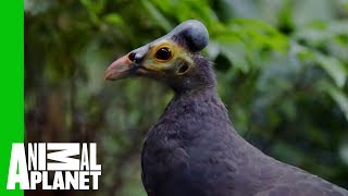 The Path To This Bird's Heart Is Paved With Peanuts | The Zoo