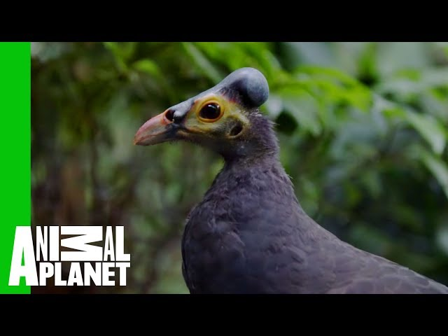 Boogie Down Bronx Zoo Returning To Animal Planet For Season 2 Of