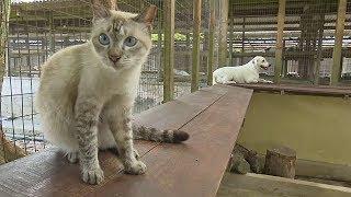 Более тысячи животных приютил «Ноев ковчег» в Малайзии (новости)