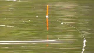 Рыбалка на карася Ловля карася на поплавочную удочку Поплавок крупным планом