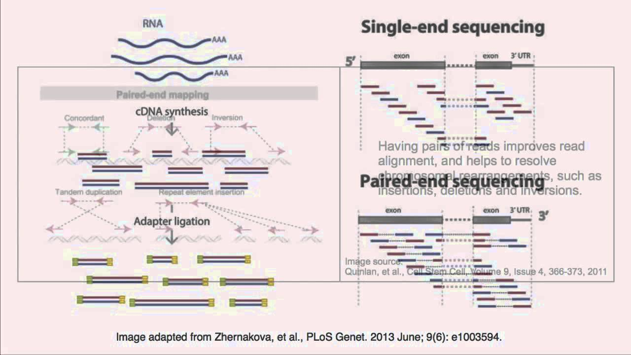 paired end sequencing