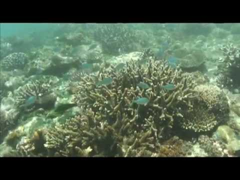Reef Snorkeling in Madagascar