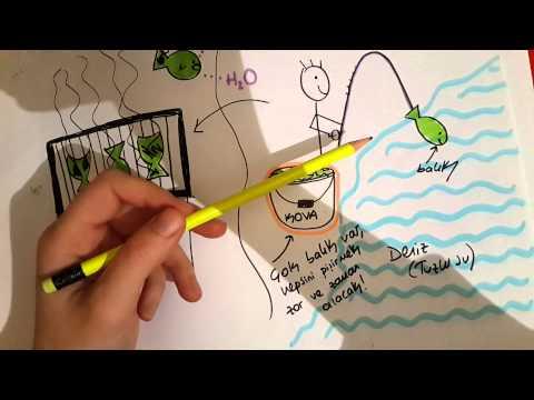 ORGANİK BİLEŞİKLER _Hafıza teknikleri  #1