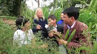Trò chuyện với người cứu cây dược liệu Việt   VNOTV