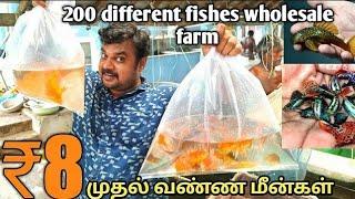 30ஆயிரம் முதலீட்டில் | மாதம் 20 ஆயிரம் சம்பாதிக்கலாம் | Wholesale fish farm | yummy vlogs tamils