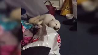 FUNNY ANIMAL AND FAIL COMPILATION VIDEOS EP 5
